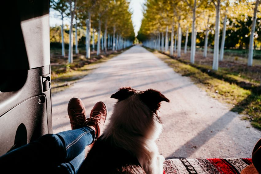 cómo viajar con un perro